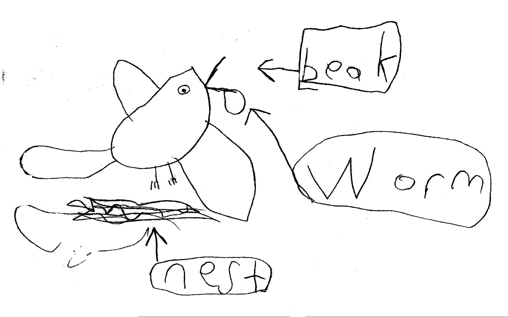 Bird diagrams and ABC Charts